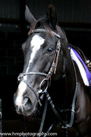 Don Cossack at the Leopardstown  Horse Racing Ireland launch of the Christmas Festival at Gordon Elliot's yard