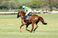 02nd Quantitativeeasing ( 11 , orange and green hoops ) and N. Carberry - Trainer : E. Bolger - Owner : John P. McManus