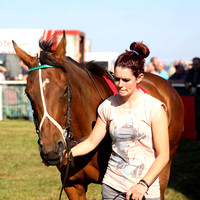 Parade ring  - race 1 at Laytown - CU2D0733-3