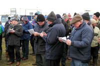 Spectators mark their cards at Tyrella