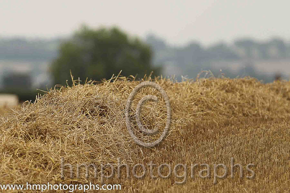 Hay Field at Down Royal