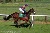 07th B Tom's Article ( 8 , blue and orange qtrd ) and K.C. Sexton - Trainer : Gordon Elliott - Owner : Mrs Emer O'Brien